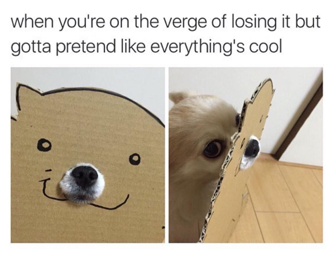 When Your Life Becomes One Big Long Dank Meme Funny Relatable Memes Really Funny Memes Funny Animal Memes