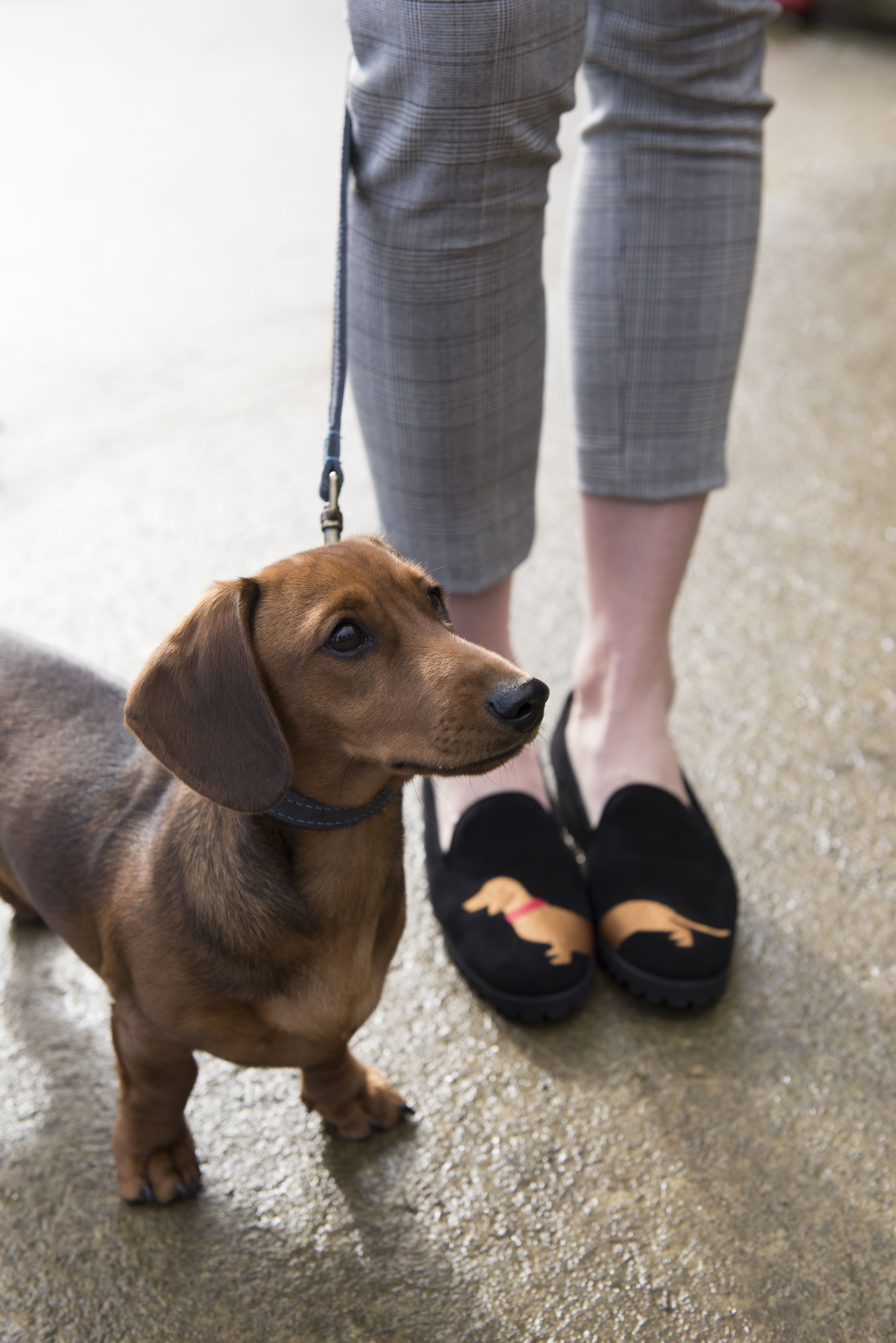 Carl Scarpa Black Slip On Daschund Loafers When You Love Dogs This