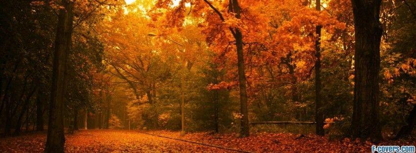 golden autumn park Facebook Cover timeline photo banner ...