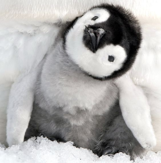 Baby penguin We've put together some of the best, the cutest and the most downright adorable cute b