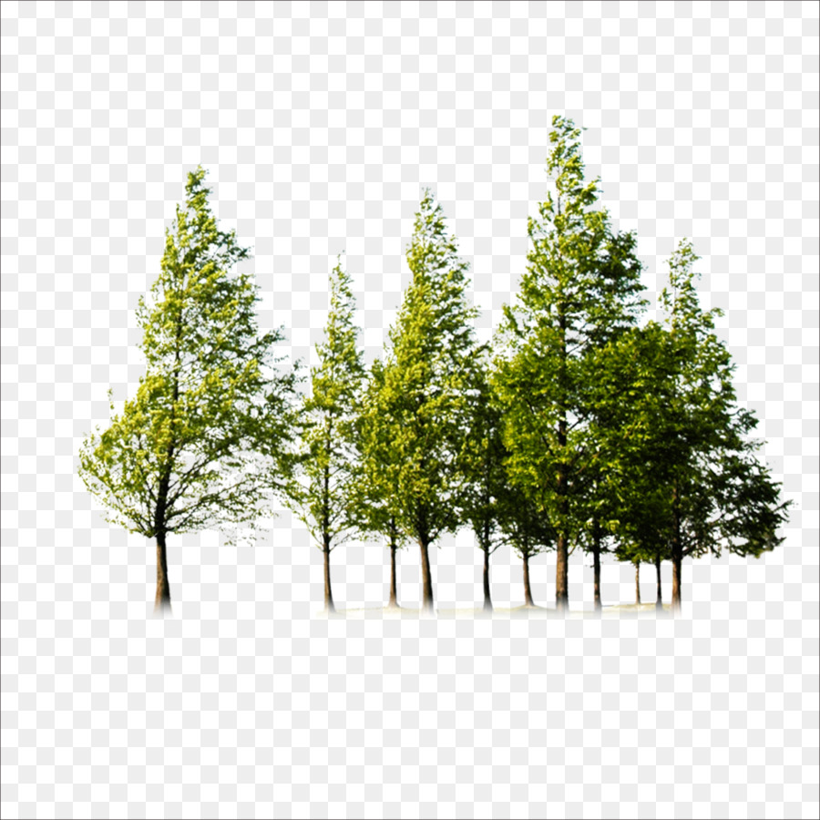Tree Trees Png Download 1773 1773 Free Transparent Tree Png Family Tree Background Tree Photoshop Tree Illustration