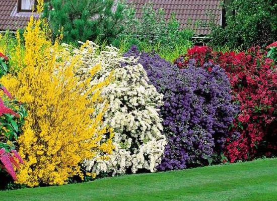 3 conseils pour un jardin à l\'abri des regards | Carré de l ...