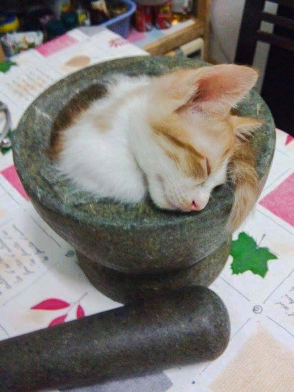 Pin By Rennercat On Animals Cute Cats And Kittens Cute Cats Crazy Cats