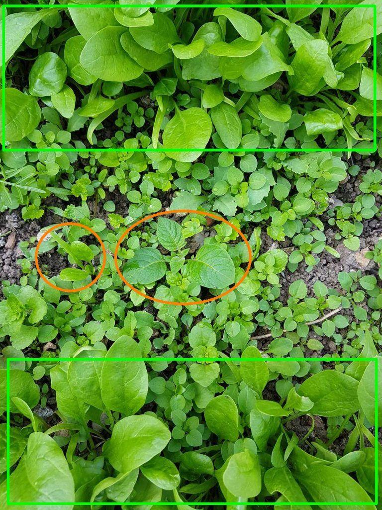 Pin Auf Gartengestaltung Ideen