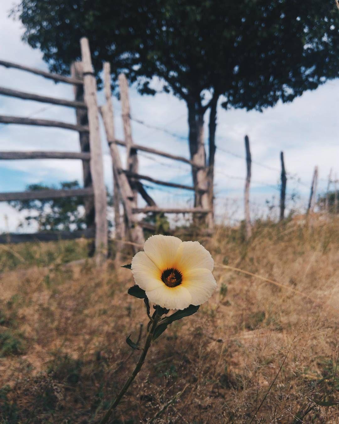 a vida sorriu para a linda flor e a flo-riu