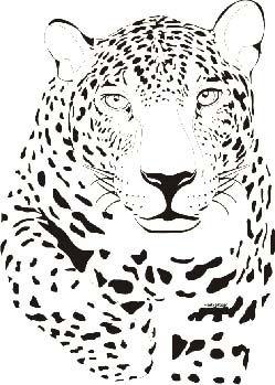 Onca Pintada Desenho Feito Por Maria Muller Desenho De Animais