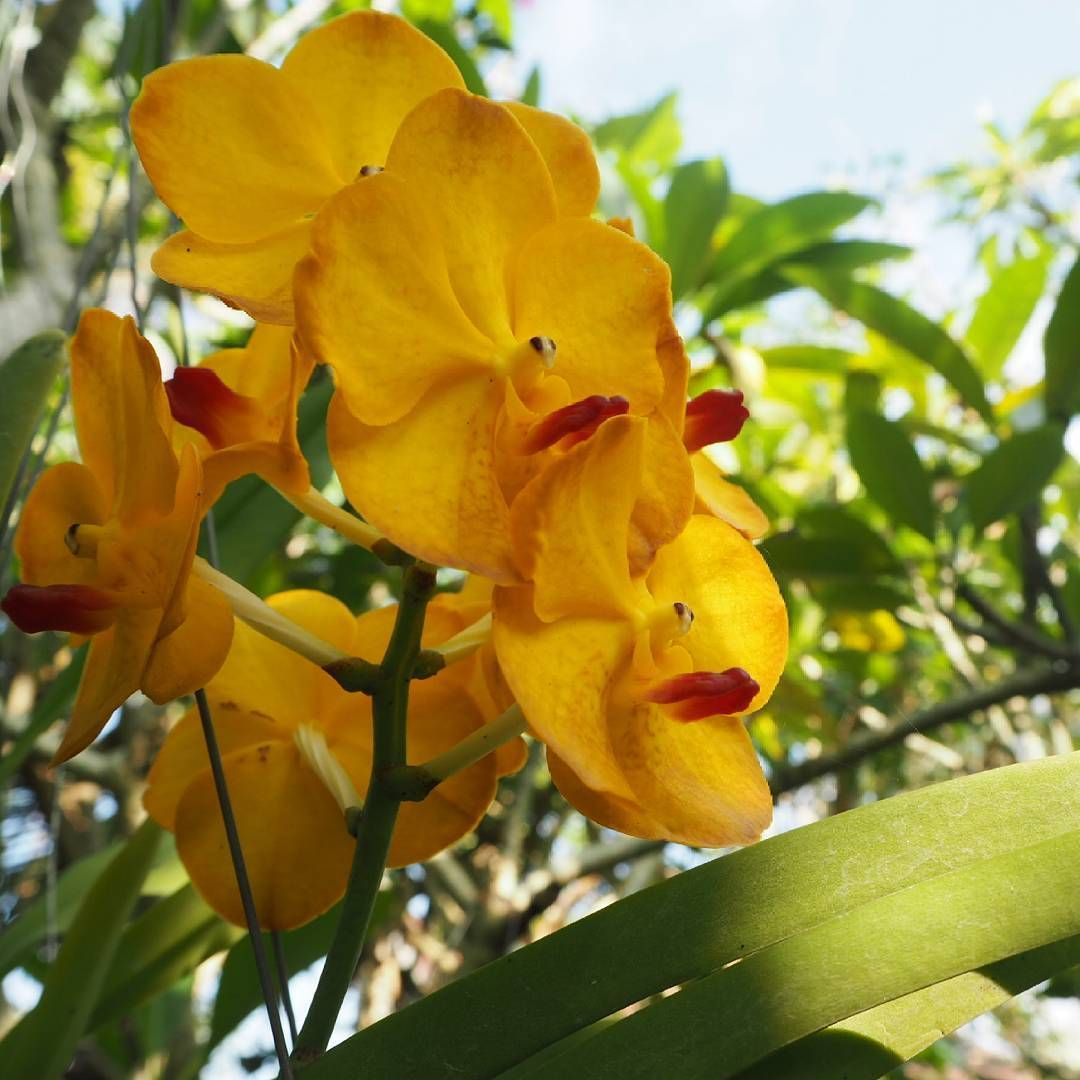 Yellow orchids flowersphotography flowers sun green