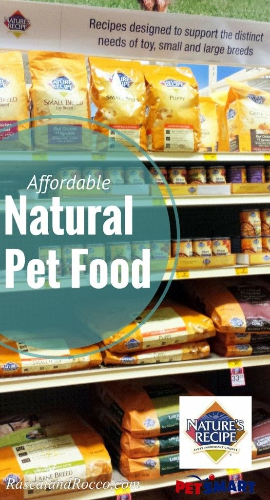 Does Your Pets Holiday Schedule Look Like This Naturesrecipe Healthy Cat Food Natural Dog Food Natural Pet Food