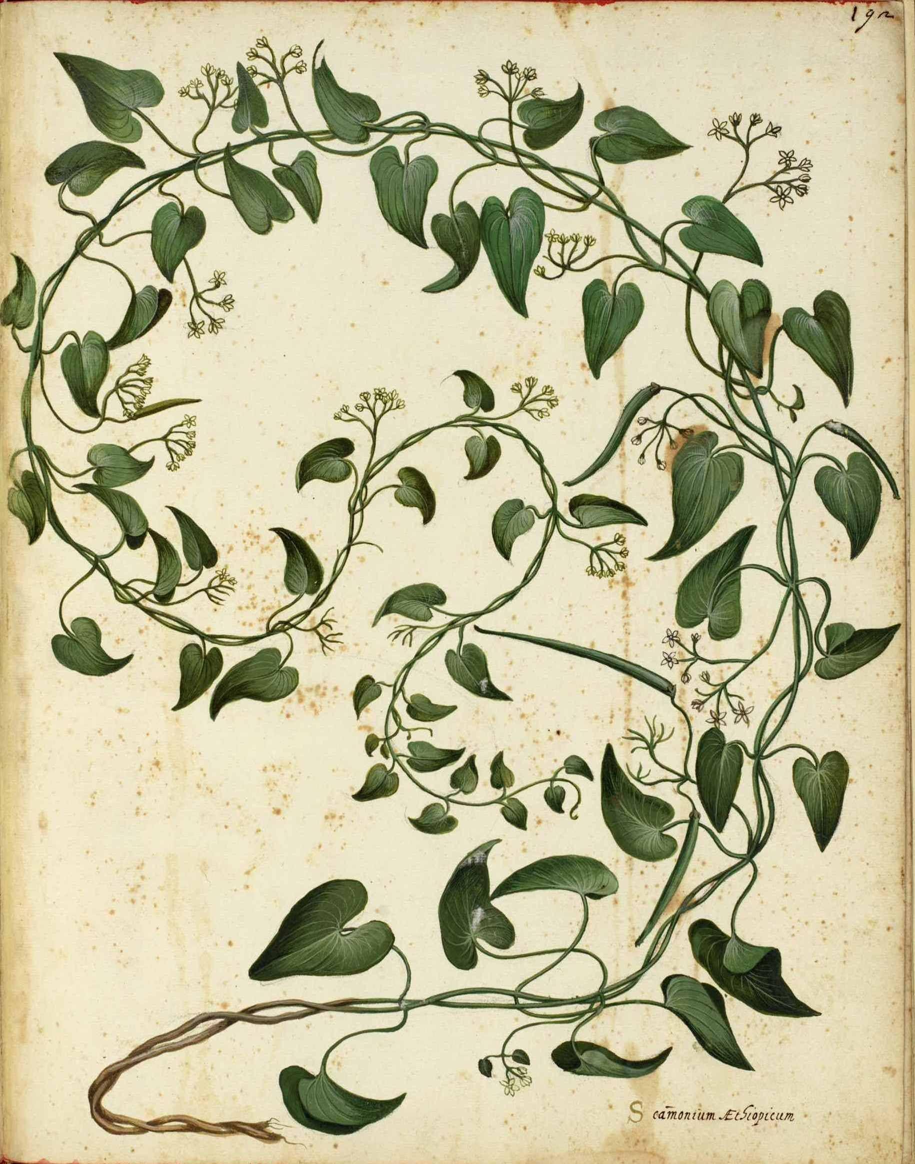 775 Vintage Botanical Flowers | Printables + Public Domain ...  775 Vintage Bot...