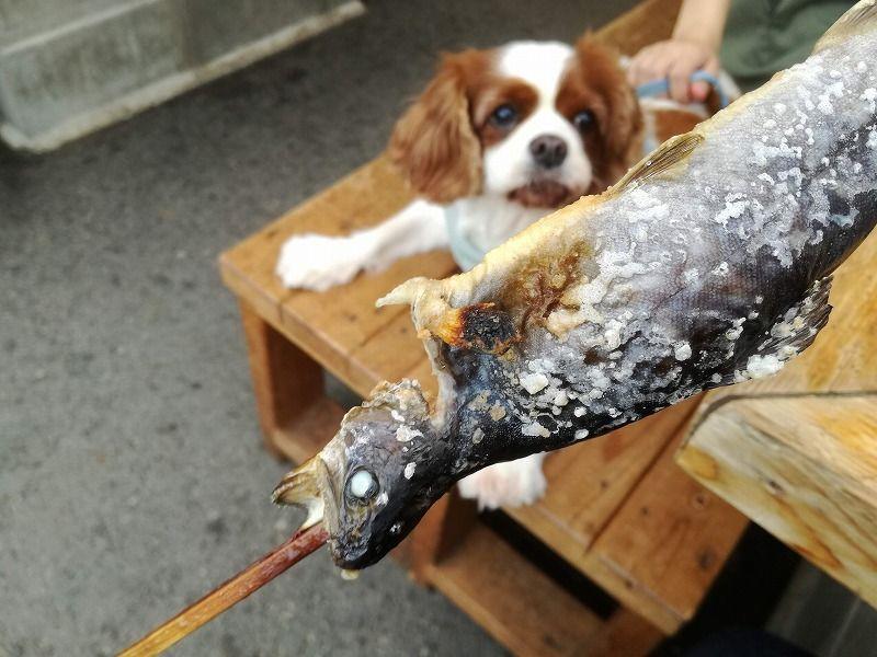 エピナール那須 犬連れ那須の旅 我が家のおすすめプラン まちろブログ 犬 エピナール 釣り 魚