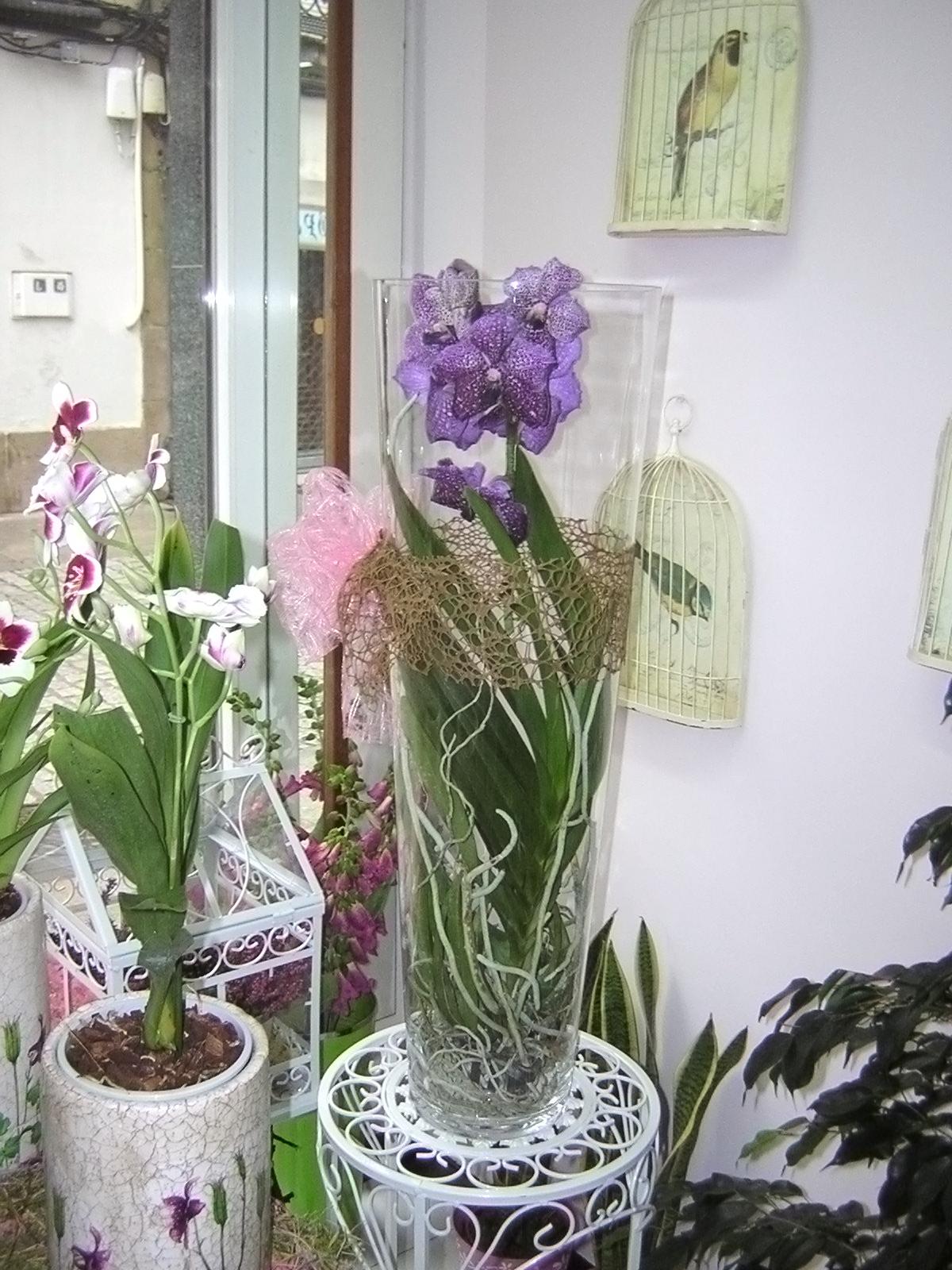 Los Cuidados De La Orquidea Vanda Orquideas Pinterest Orchid - Cuidados-de-la-orqudea