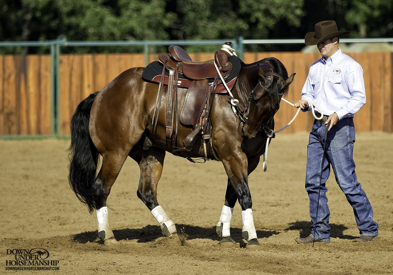 groundwork horses - HD1500×1050