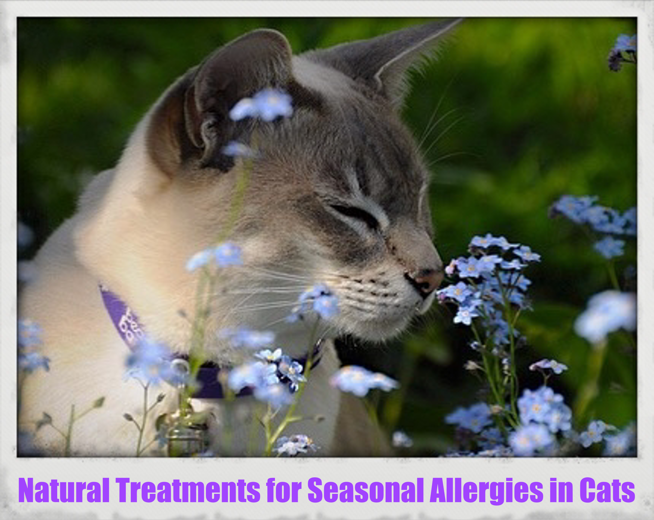 Just like humans, cats can suffer from seasonal allergies