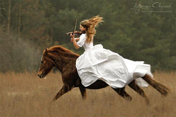 pferd geige fotografie pferde sch nste pferde und pferde hintergrundbilder