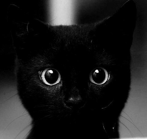 Toothless Looks Just Like My Kitten Alfred If I Had Thought About