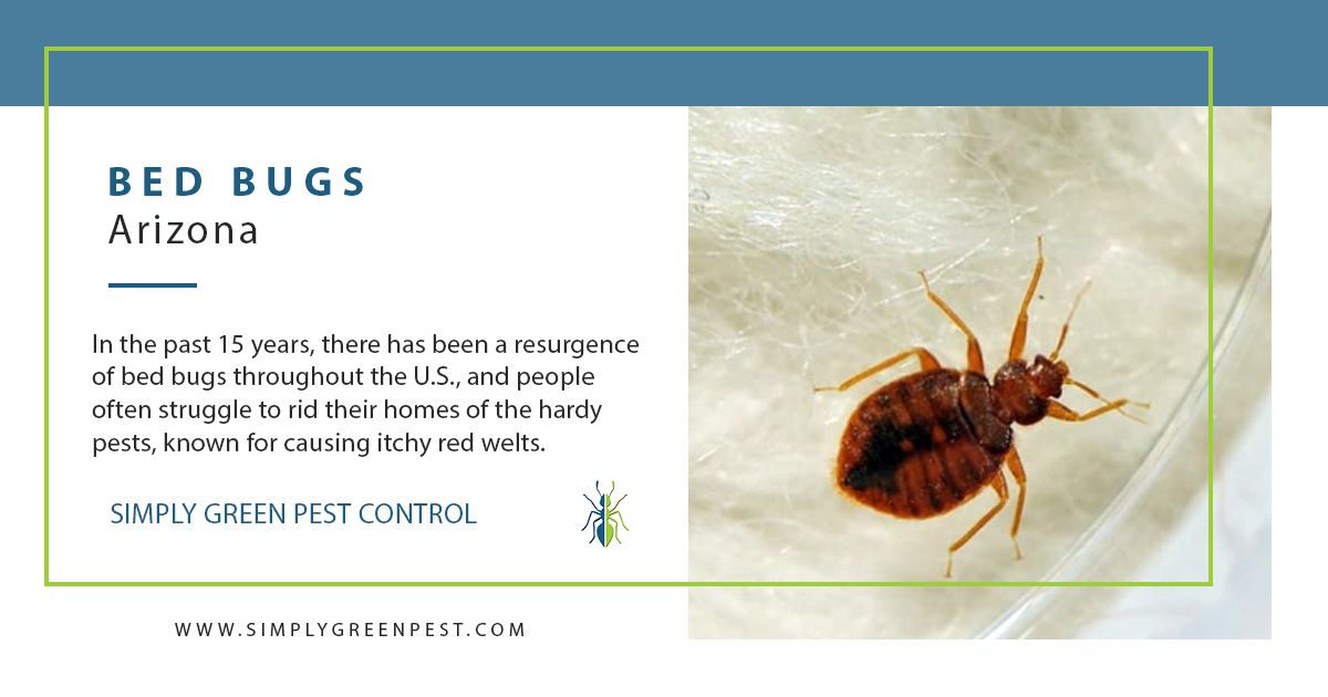 Think You May Have Bed Bugs Act Fast And Don T Do It Alone Enlist Professional Help Bedbugs Pestcontrol Green Pest Control Pest Control Mosquito Treatment