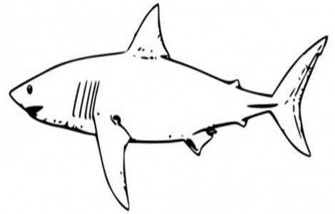 Sharks Pictures To Print Shark Coloring Pages Shark Drawing