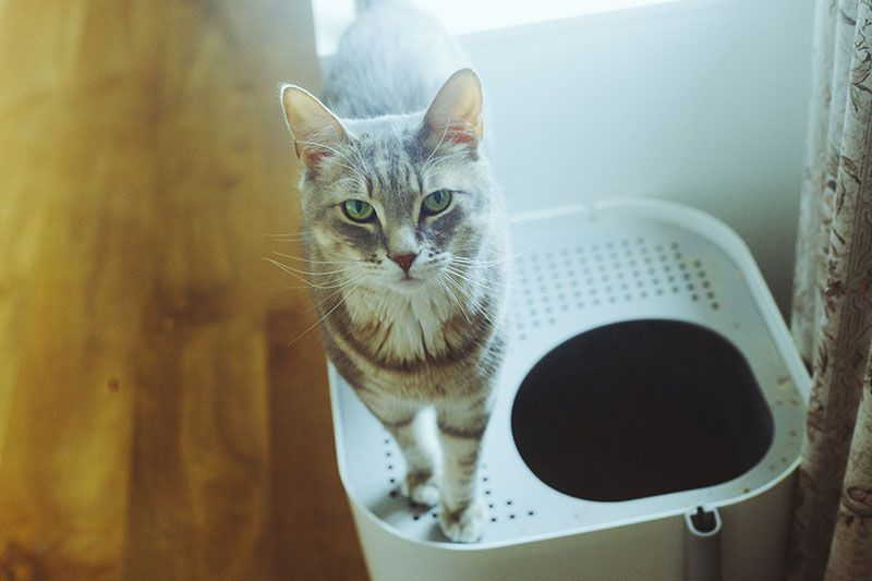 Cat Limited Space Best Litter Boxes For Even The Smallest