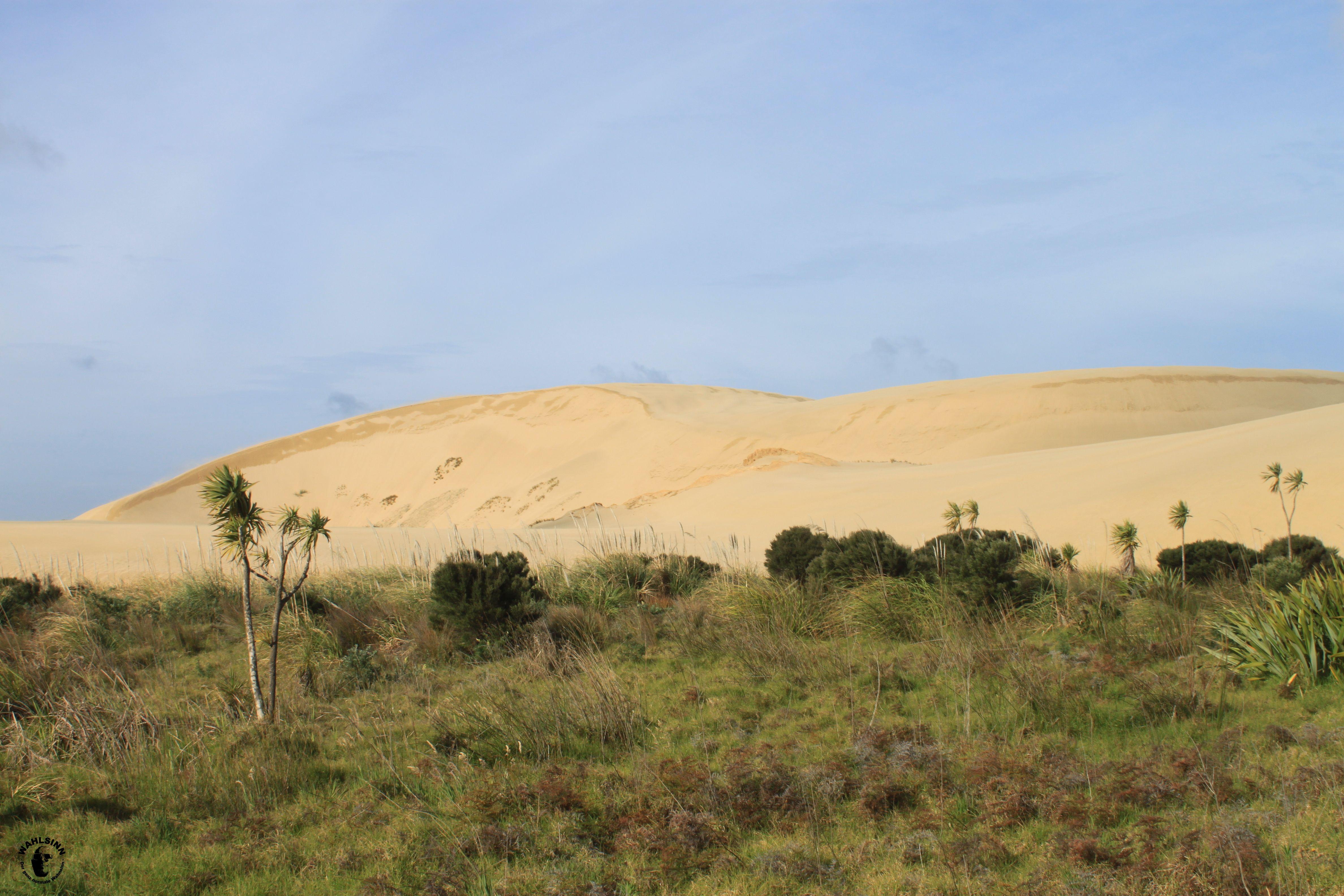 Neuseeland - Sandboard Hügel
