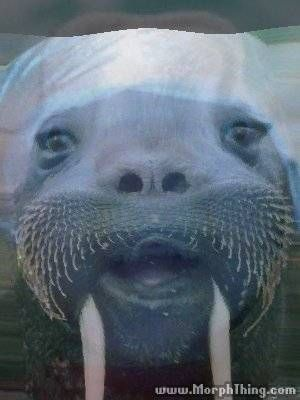 I MORPHED MYSELF WITH A WALRUS  I LOOK SO HAPPY