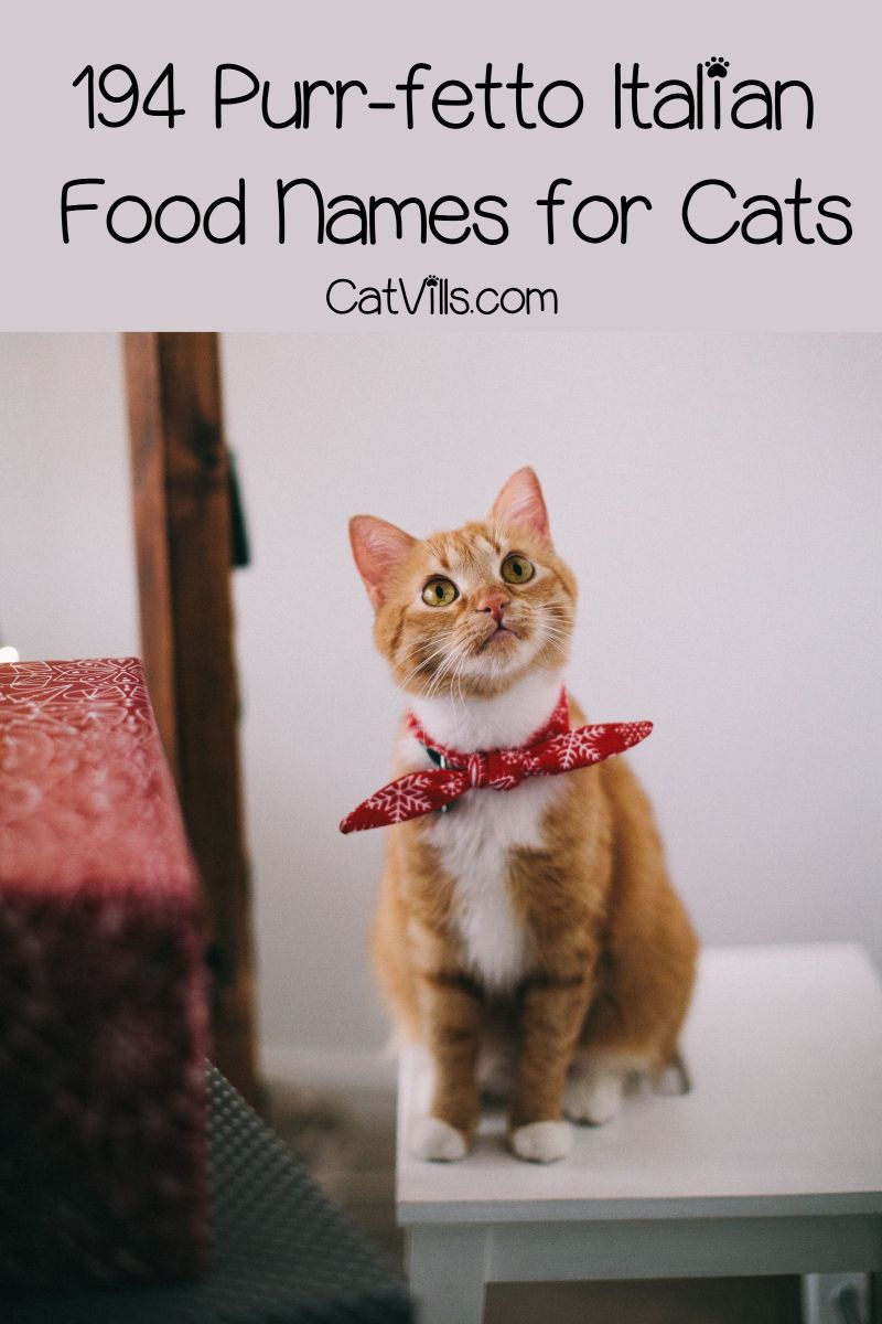 194 Purr Fetto Italian Food Names For Cats Catvills Cat Names Italian Food Names Cats