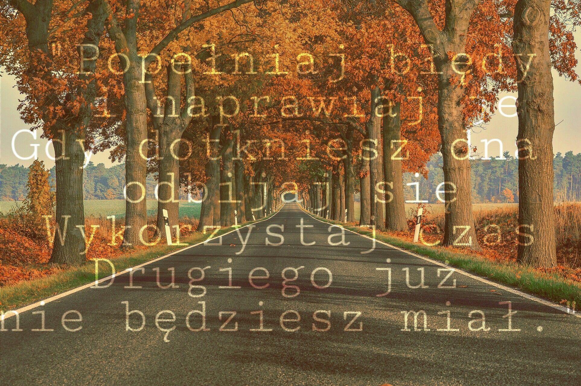 Acidland By Myslovitz Piosenki