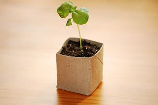 KendollMade: Repurposed Toilet Paper Roll Seed Starter Pots