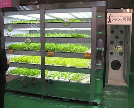 Lettuce Vending Machine - From Japan