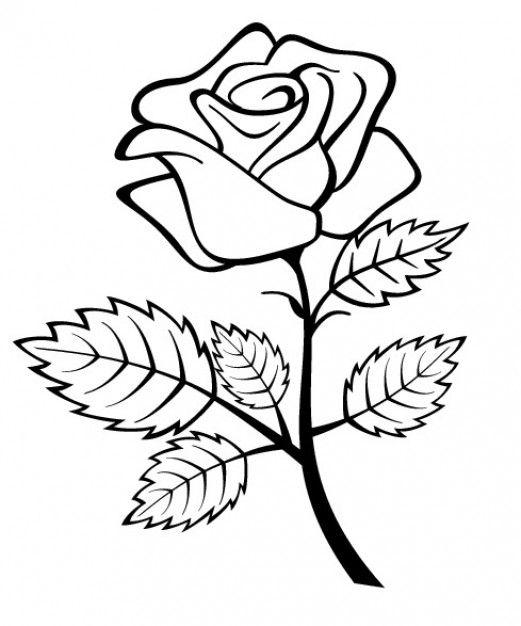 Download Rose Flower With Branch And Leaves For Free Rose Coloring Pages Flower Coloring Pages Flower Sketch Images