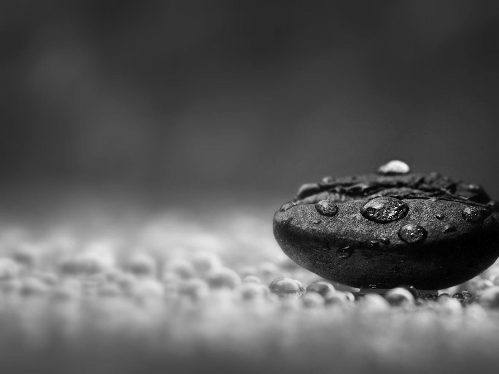 Nature Water Drops Macro Black And White Photography Jpg 1600 1200 Macro Photography Wallpaper Coffee Photography Rain And Coffee