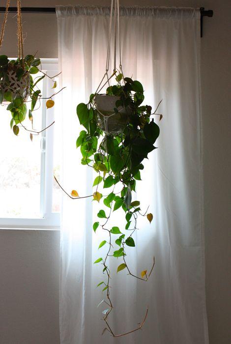 indoor hanging plants on pinterest. Black Bedroom Furniture Sets. Home Design Ideas