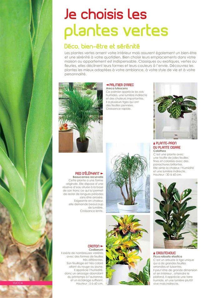 Catalogue et promotions de VillaVerde | plantes | Decoraciones de ...