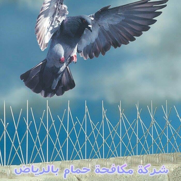 شركة مكافحة حمام فى الرياض ربما كان الحمام طائرا بديعا جميل المنظر طيب الطعم و قد اعتاد الناس رؤيته يحلق فى الأجواء و Get Rid Of Pigeons Bird Control Bird