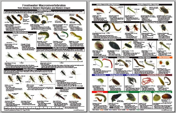 insect larvae identification guide | laminate field guide by ...