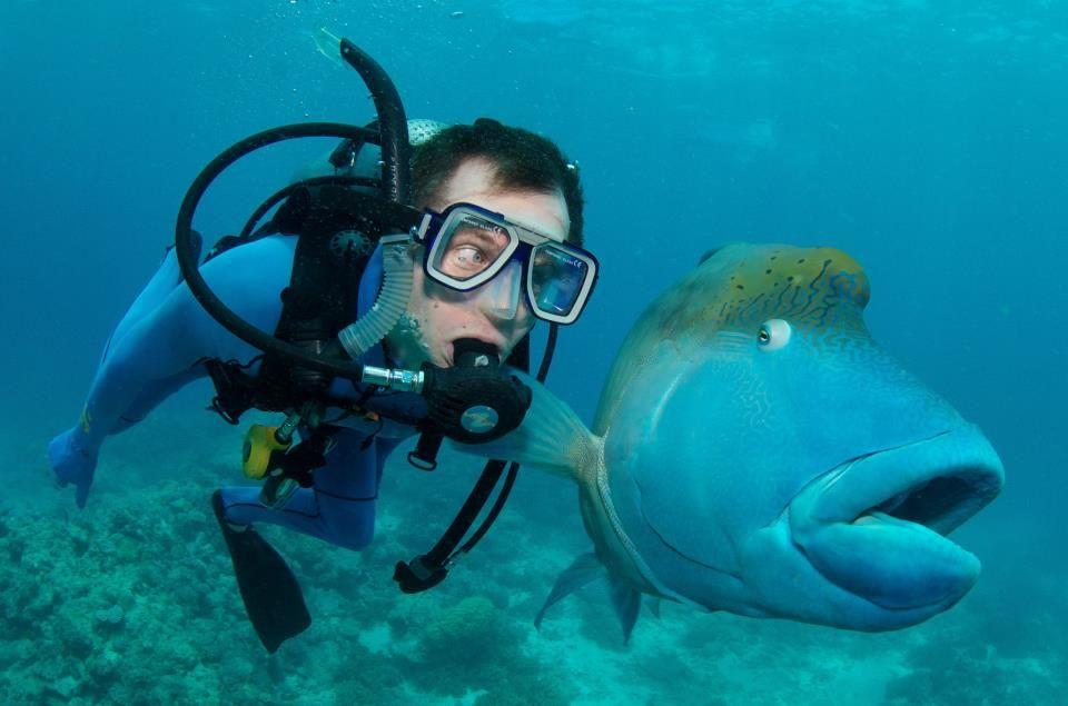 Прикольные картинки про аквалангистов