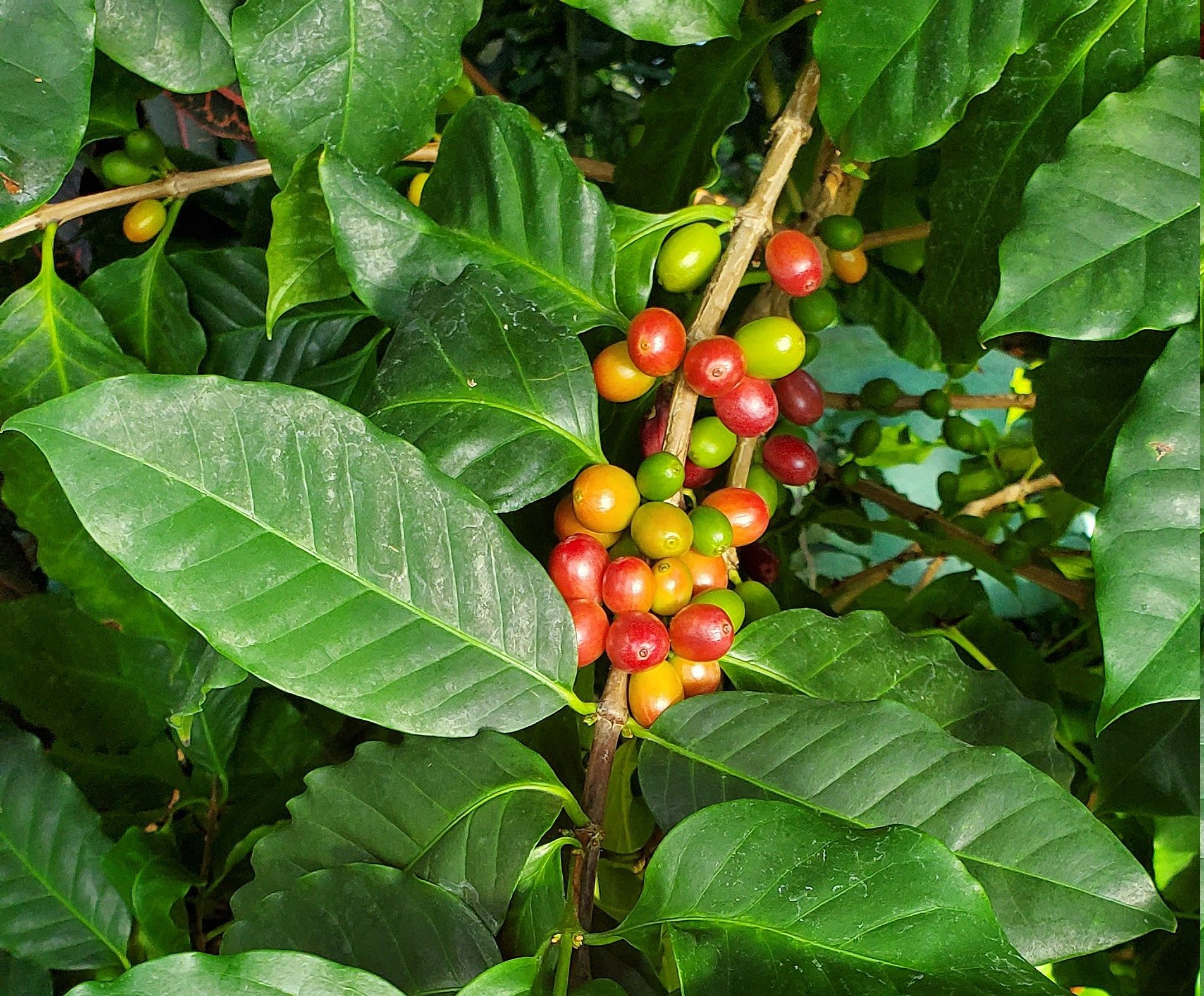 29+ What are coffee beans used for ideas