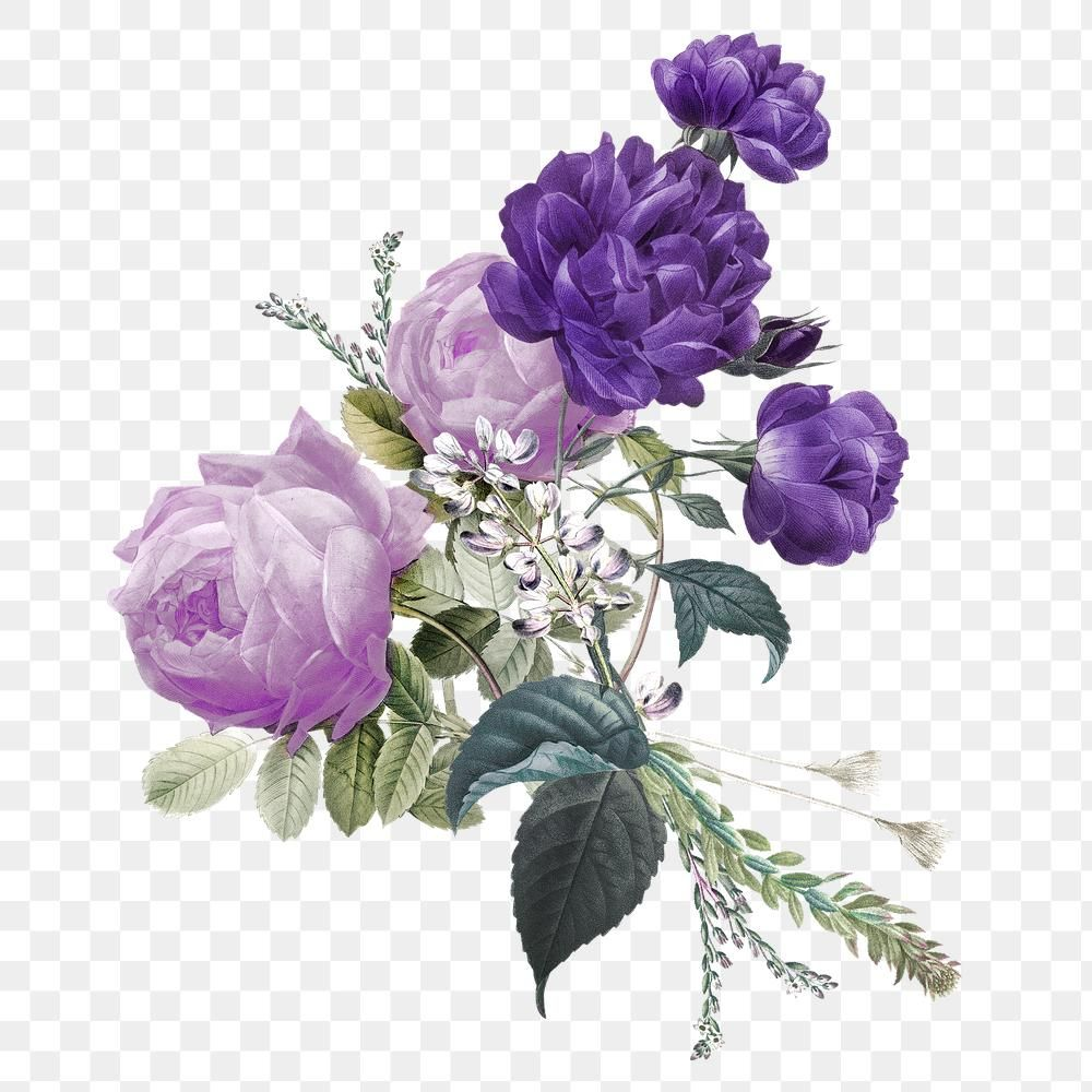 Purple Roses Bouquet Png Hand Drawn Vintage Illustration Premium Image By Rawpixel Com Hein Purple Roses Rose Bouquet Free Illustrations