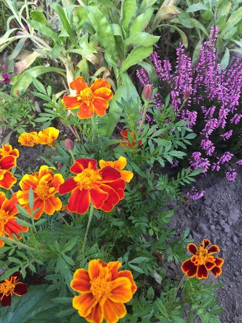 Sunnys Haus: Der Garten im September