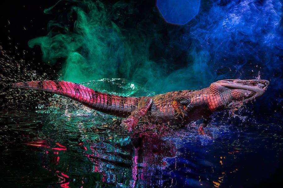 Rainbow-Colored Caiman Photography