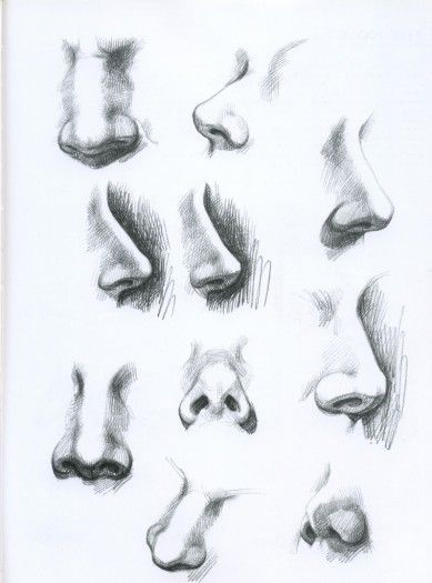 noses in different angles art pinterest draw nose drawing and art