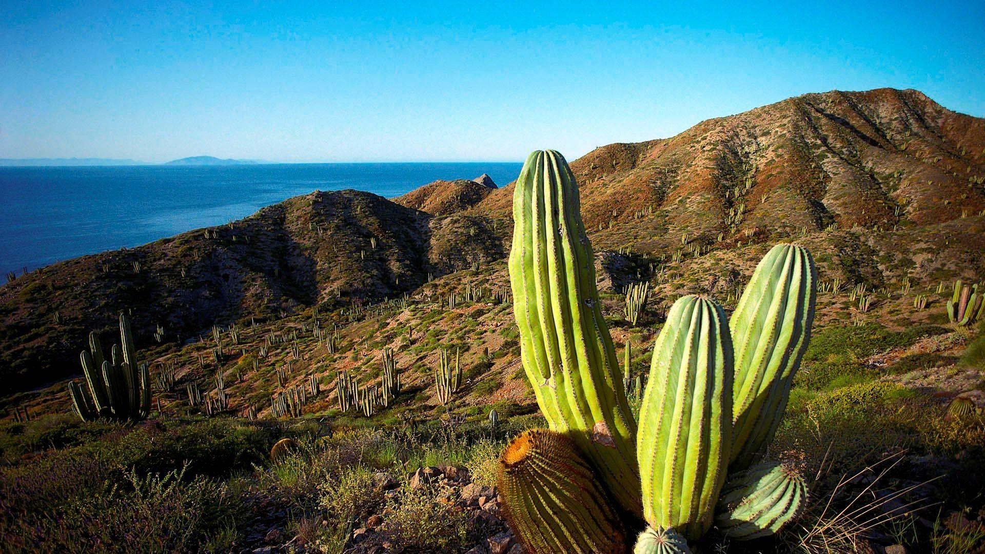sfondi hd natura deserto e cactus sfondi hd gratis