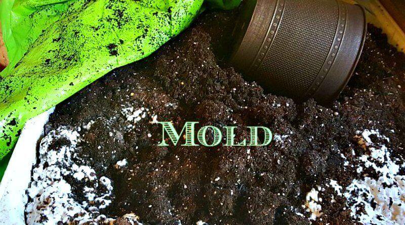 White Mold Growing On My Potting Soil Potting Soil Soil Garden Soil