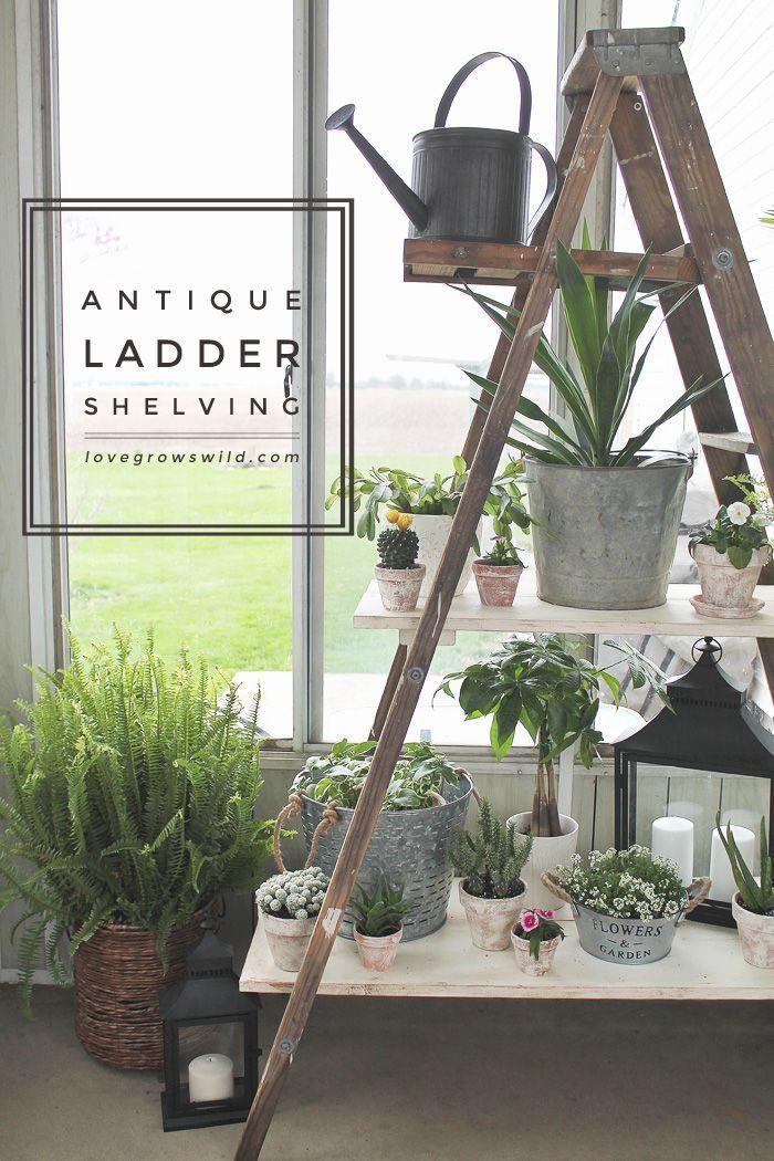 Antique Ladder Shelving - Love Grows Wild