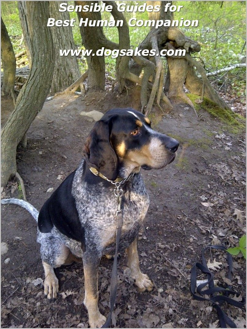 Dog Food Label Dog Food Label Dogs Dog Food Recipes Bluetick