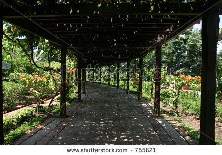 Contemporary Garden Pergola Walkways With Vines Google Search