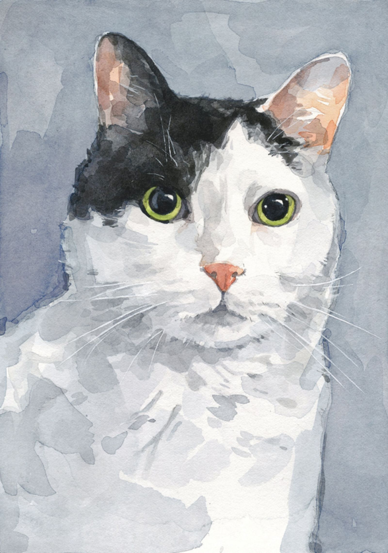 Russian Blue Cats Long Hair Cat Watercolor Portrait 8x10 Custom