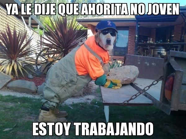 Humor Mananero 5 Si Te Reis Pasa Lince Crazy Dog Pictures Funny Dog Pictures Dog Pictures