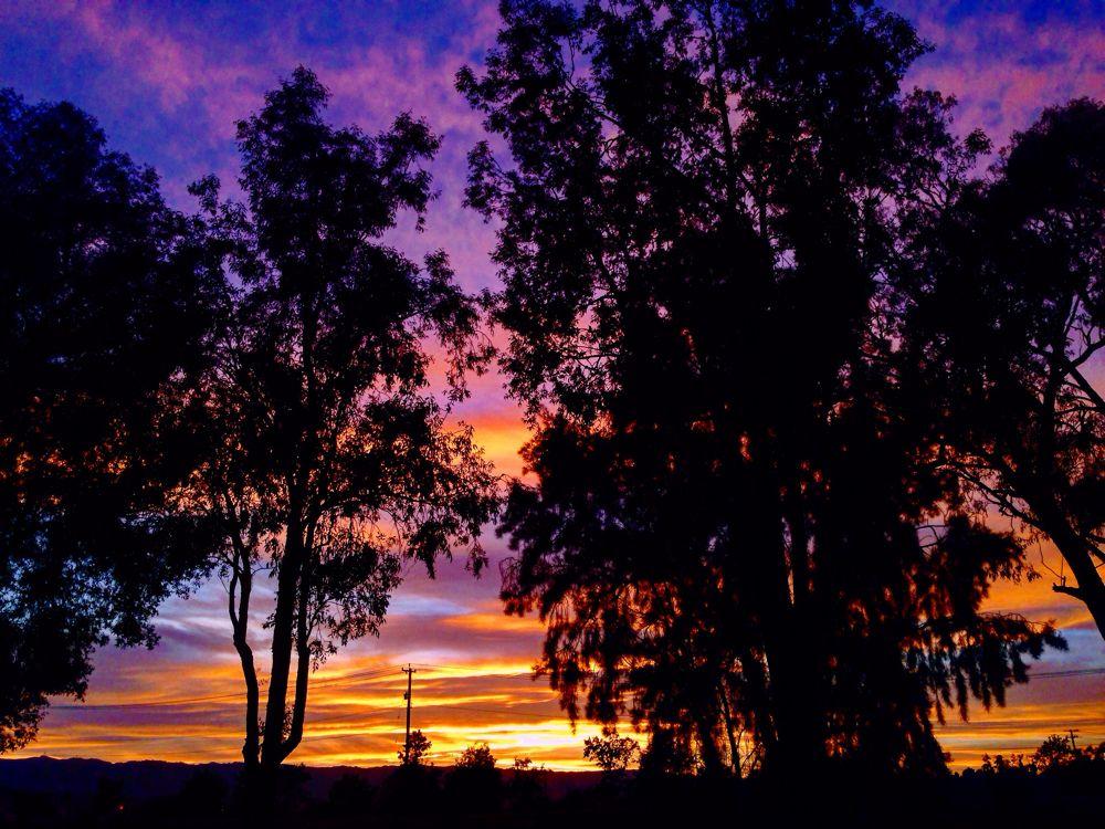 Purple Ocean #sunset #California #sky #purple #tree #clouds #red #sun #music #trust