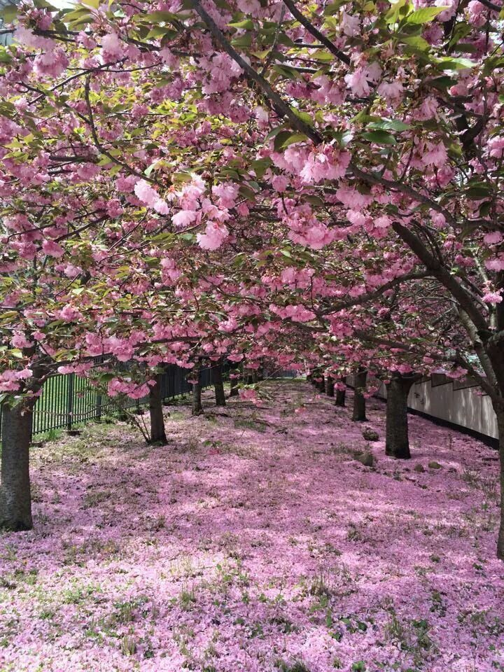 Primavera Tree Photography Beautiful Tree Beautiful Nature