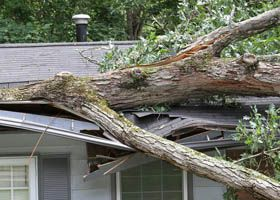 From Storm Damage Control To Tree Trimming And Removal We Have The Experience You Need Best Homeowners Insurance Homeowners Insurance Emergency Roof Repair